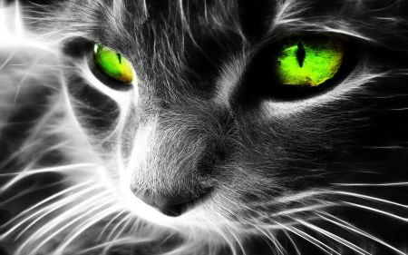 black_and_white_image_of_cats_face_with_its_eyes_highlighted_in_neon_green.1920x1200.6a8c3f74
