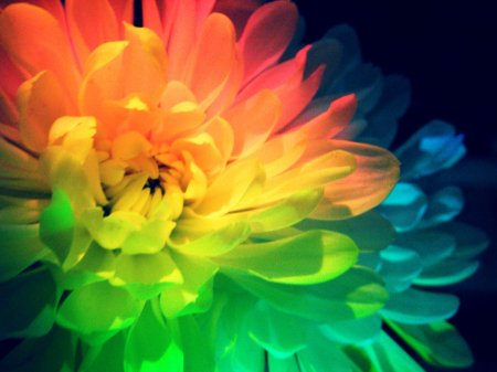 rainbow_flower_power_by_ladybyrdvisions-d36ydm3