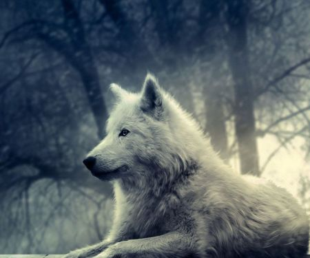 white-wolf-painting-wallpaper