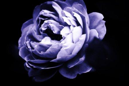 a_beautiful_darkness_by_anikaandaj-d5ph4wl