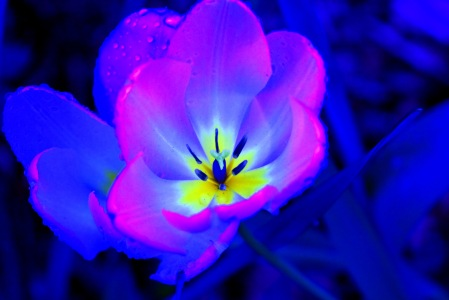 electric-blue-flower-abstract-beautiful-black-blue-cerulean-blossom